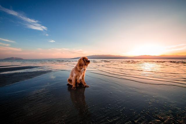 hond aan zee