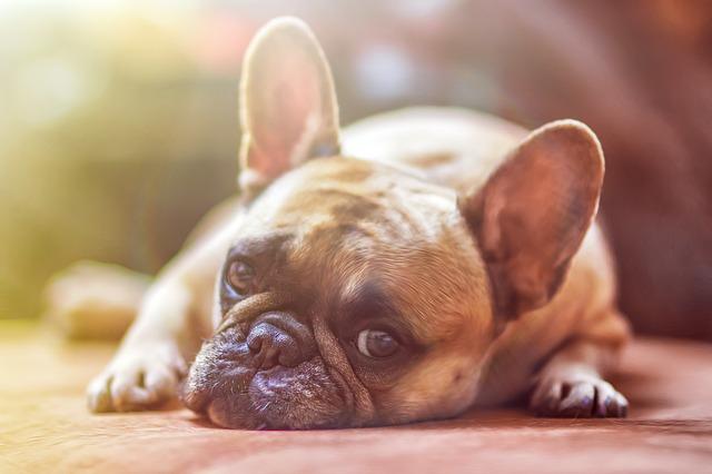 hondvriendelijke hotels