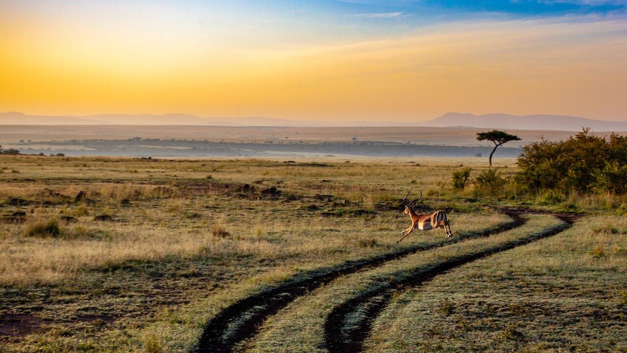 Top 5 mooiste safari's van Afrika!
