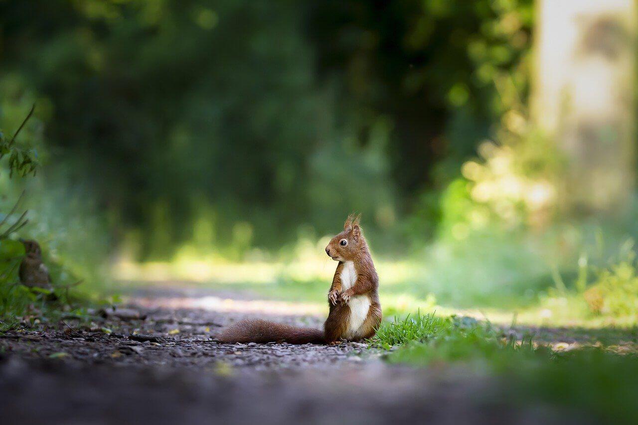 Het spotten van eekhoorns vanuit een natuurhuisje!