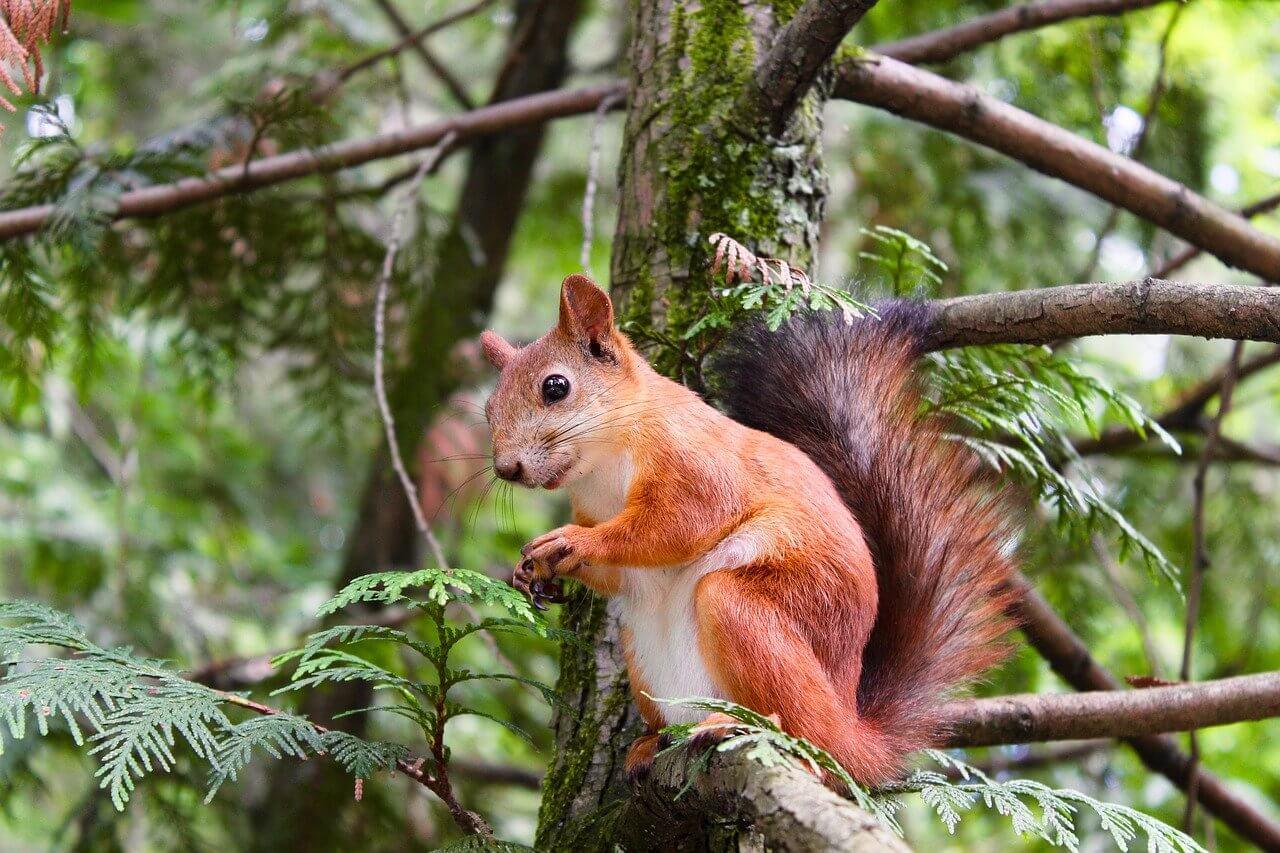 Eekhoorns spotten in de tuin van je vakantiehuisje!