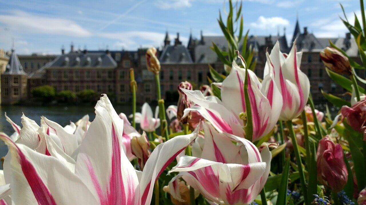 Beste vakantieparken van de provincie Zuid-Holland!