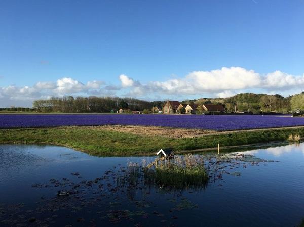 Natuurhuisje dichtbij de kust in Noord-Holland