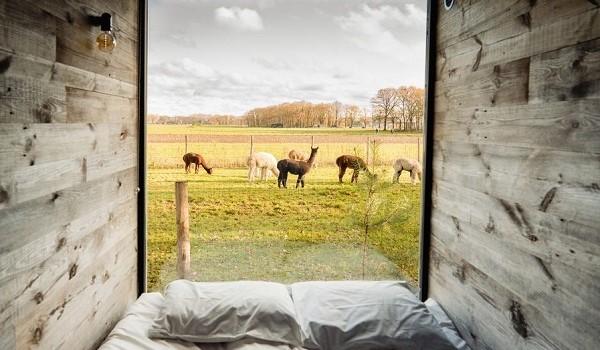 Bijzondere overnachting met alpaca's