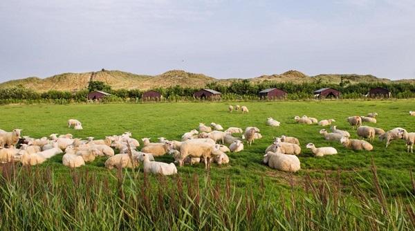 Slapen bij de boer schapenboerderij