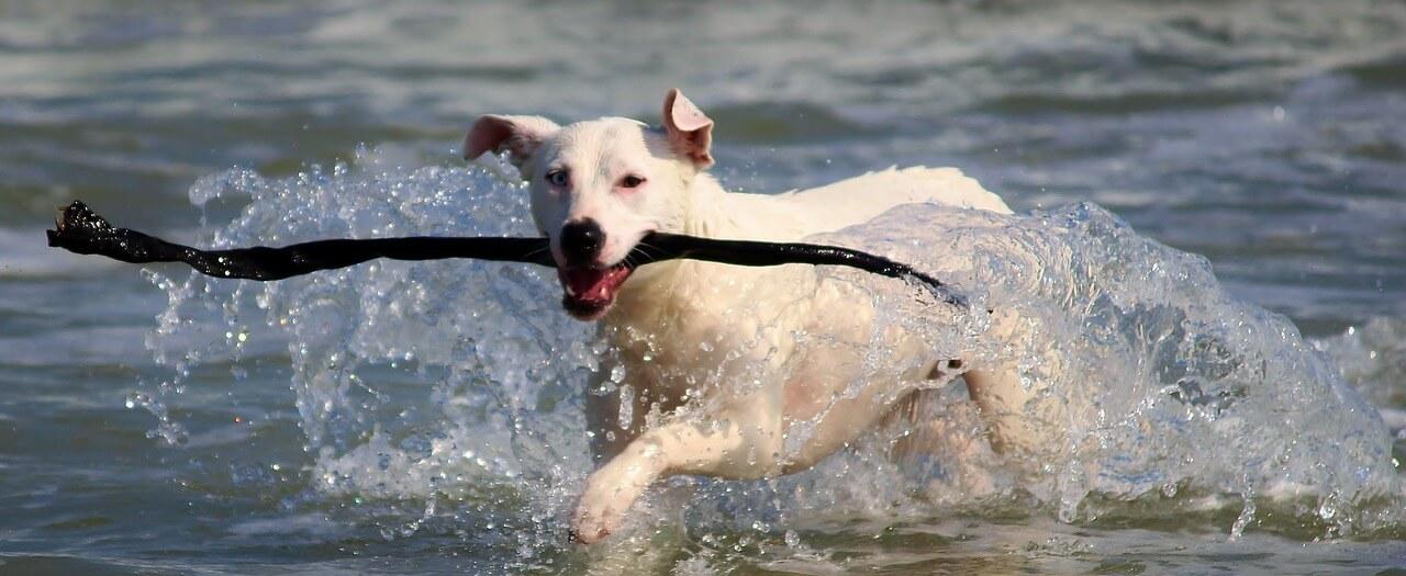10x huisje aan zee met hond!